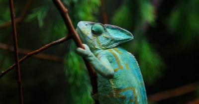 Changing nursing specialties - Green Chameleon Sitting on Plant Stalk